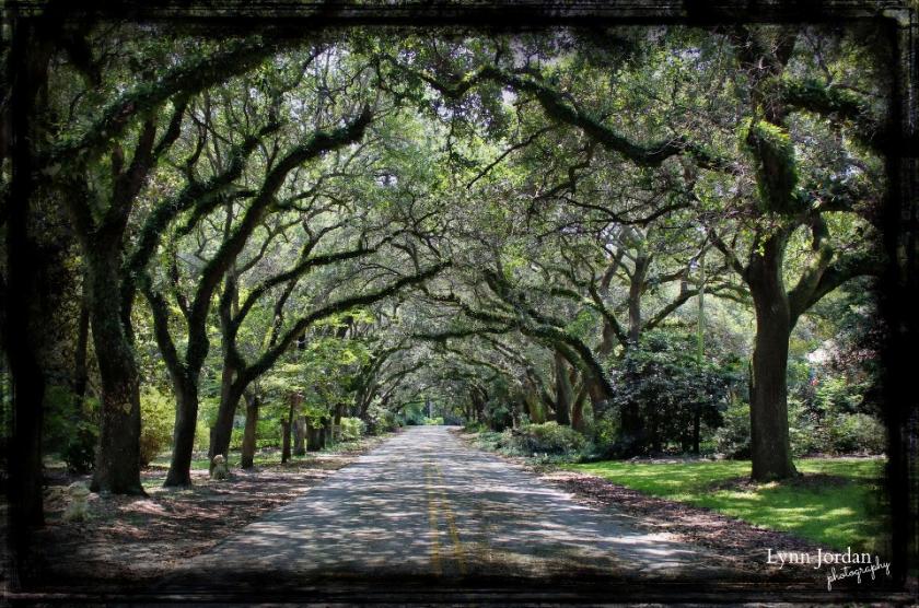live oak arches
