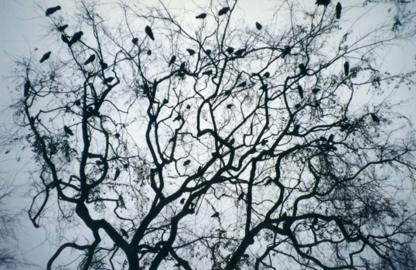 murder of crows 2