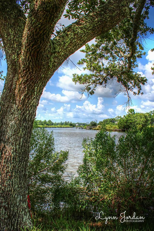 tree, river bank