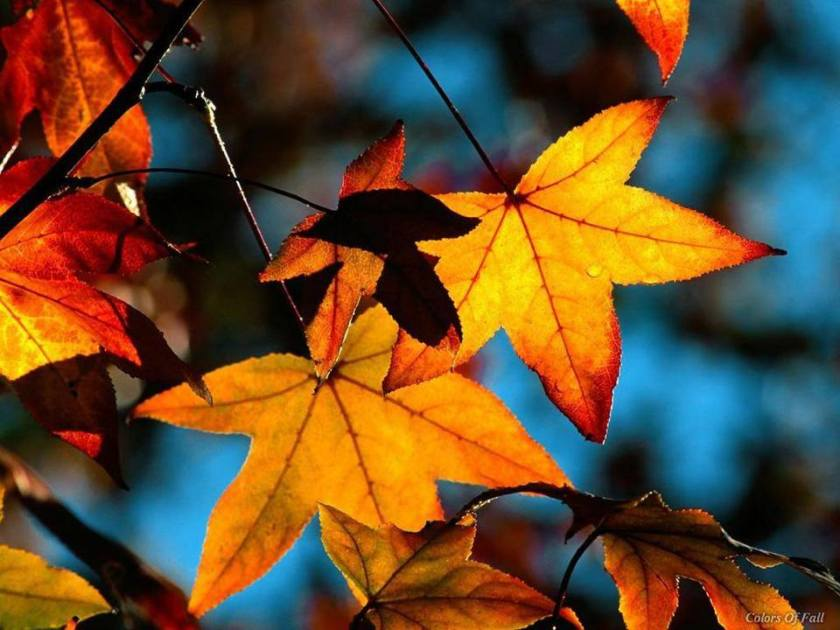 autumnal equinox--avery cotton