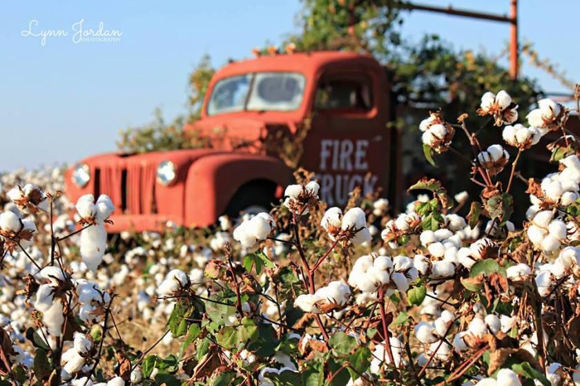 cotton, truck