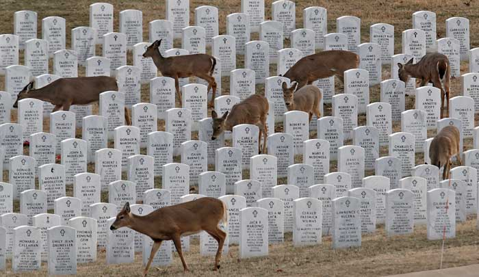Deer played among the fallen, jb forbes, stl post dispatch