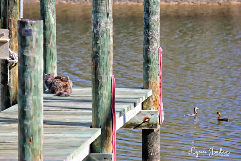 cat on the dock