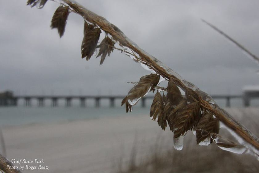 Icy sea oats