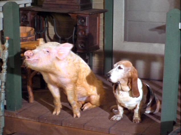What was the pigs name on green acres