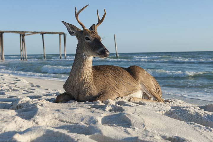 deer on beach