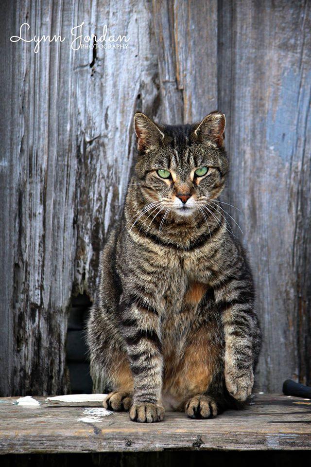 geeen-eyed kitty
