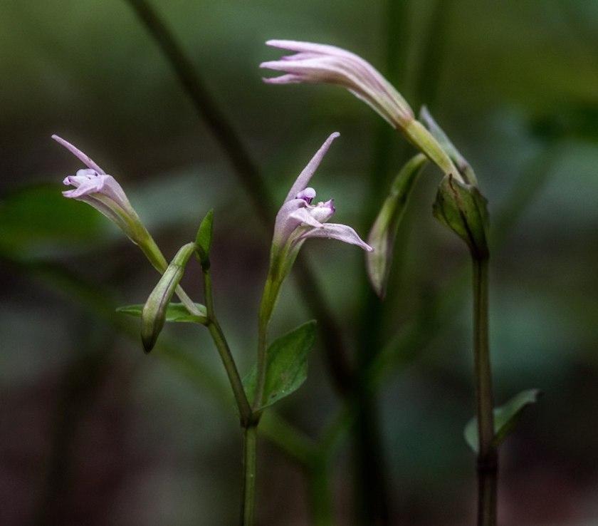 gail patton 3 birds orchid