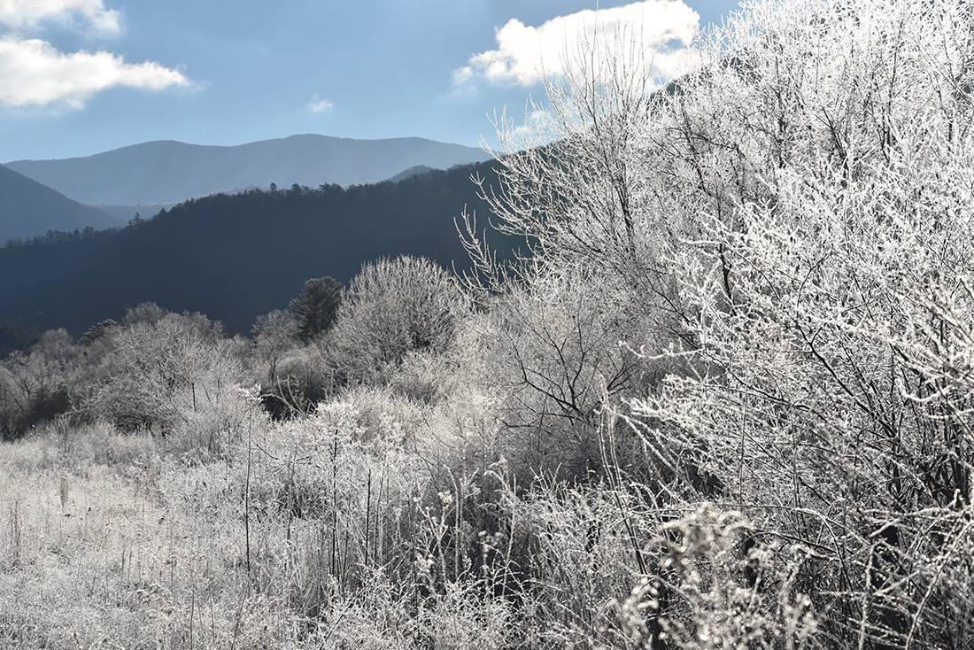 Snowy Day (Haiku)