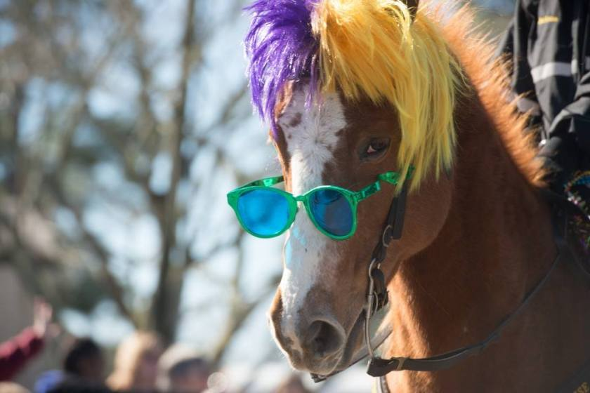 Mardi gras horse--pensacola journal