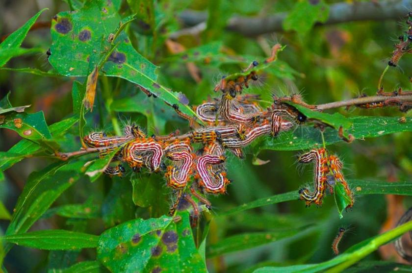 caterpillars--craig robts
