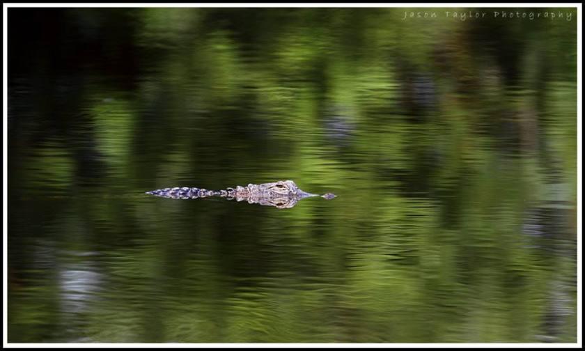 gator-jason taylor