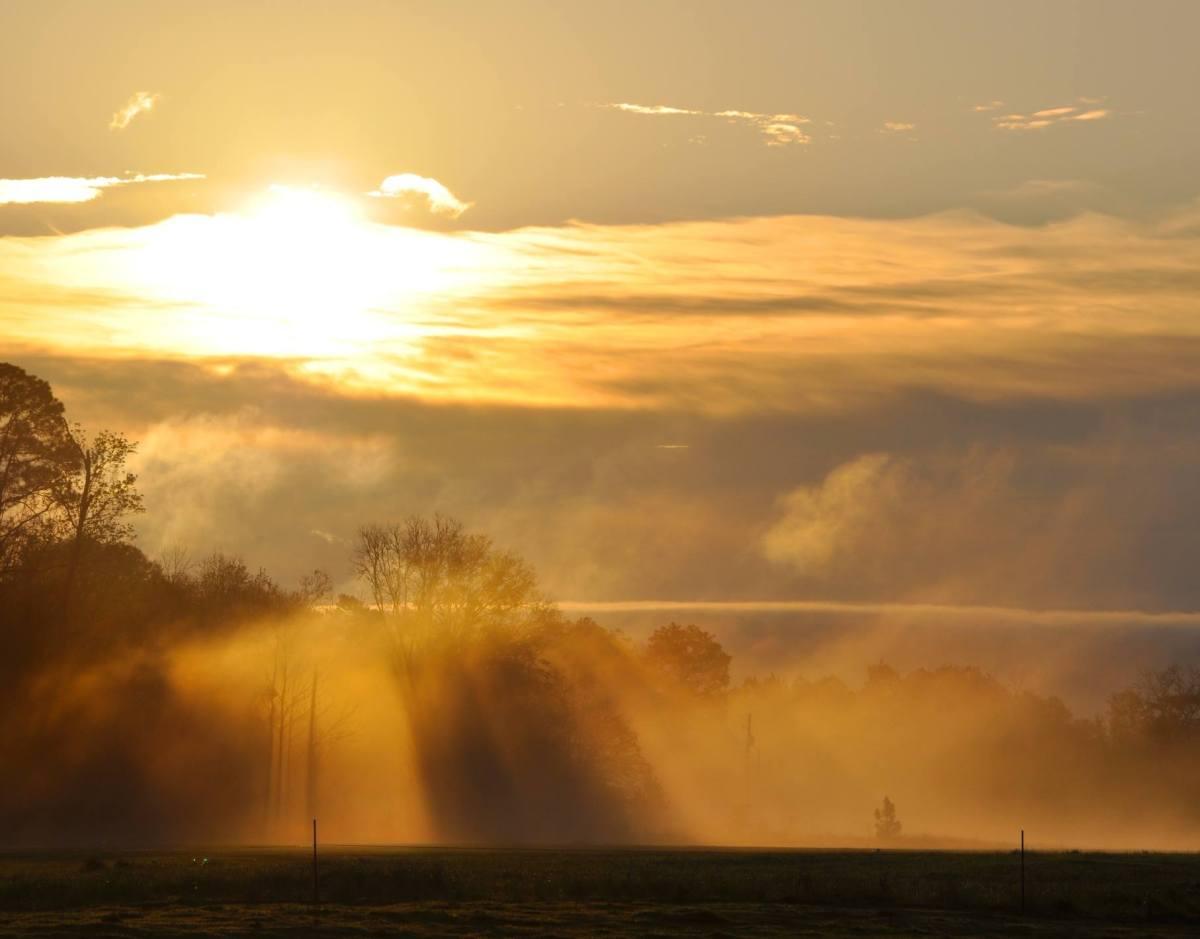 Mist of Morning