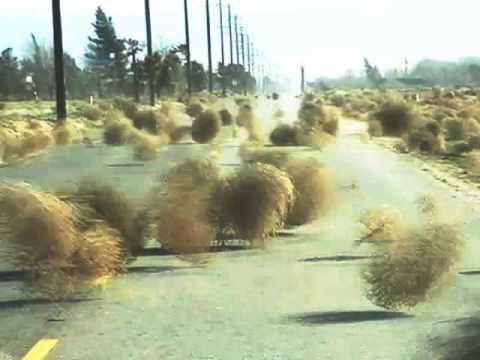 tumbleweeds 3