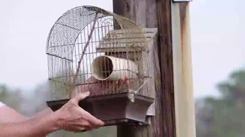 flying squirrel trap
