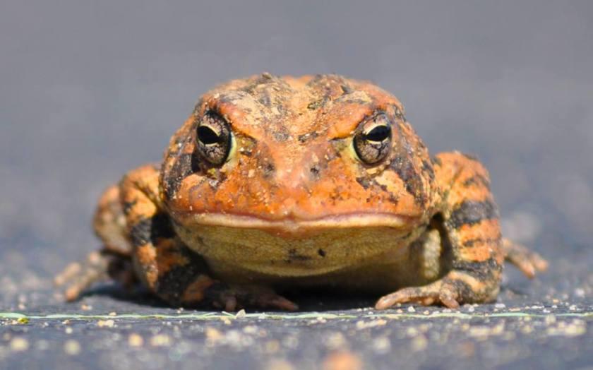 toads