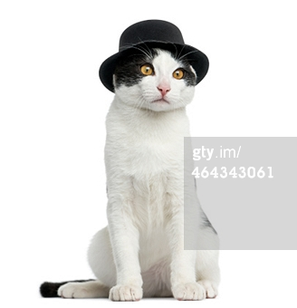cat with hat