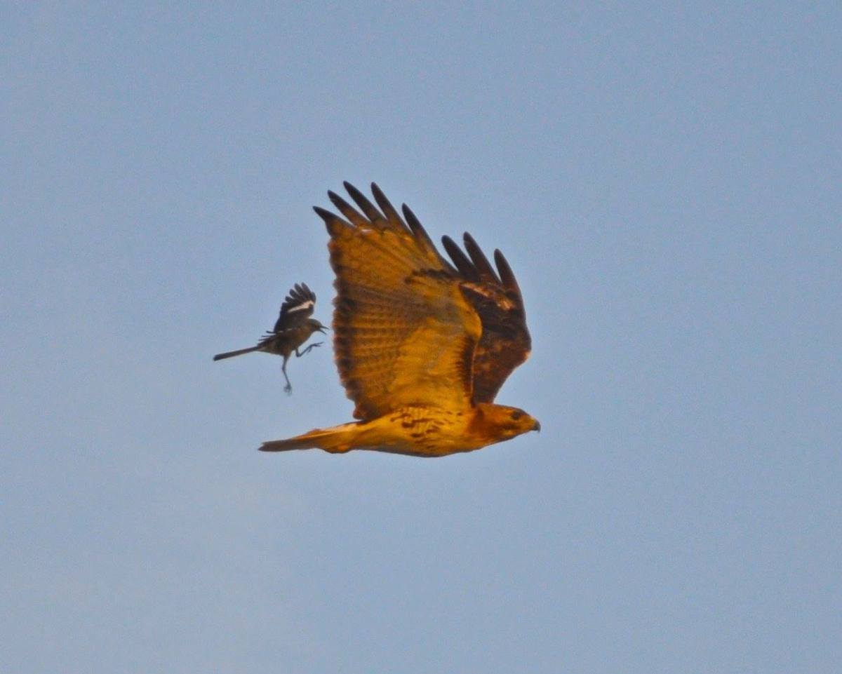 Trouble In Birdland