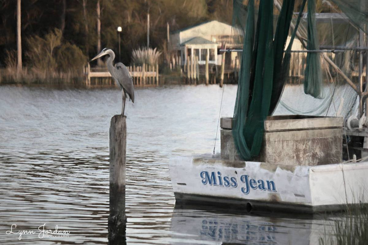 The Heron & Miss Jean…