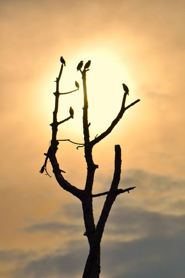 Six Starling Sunset