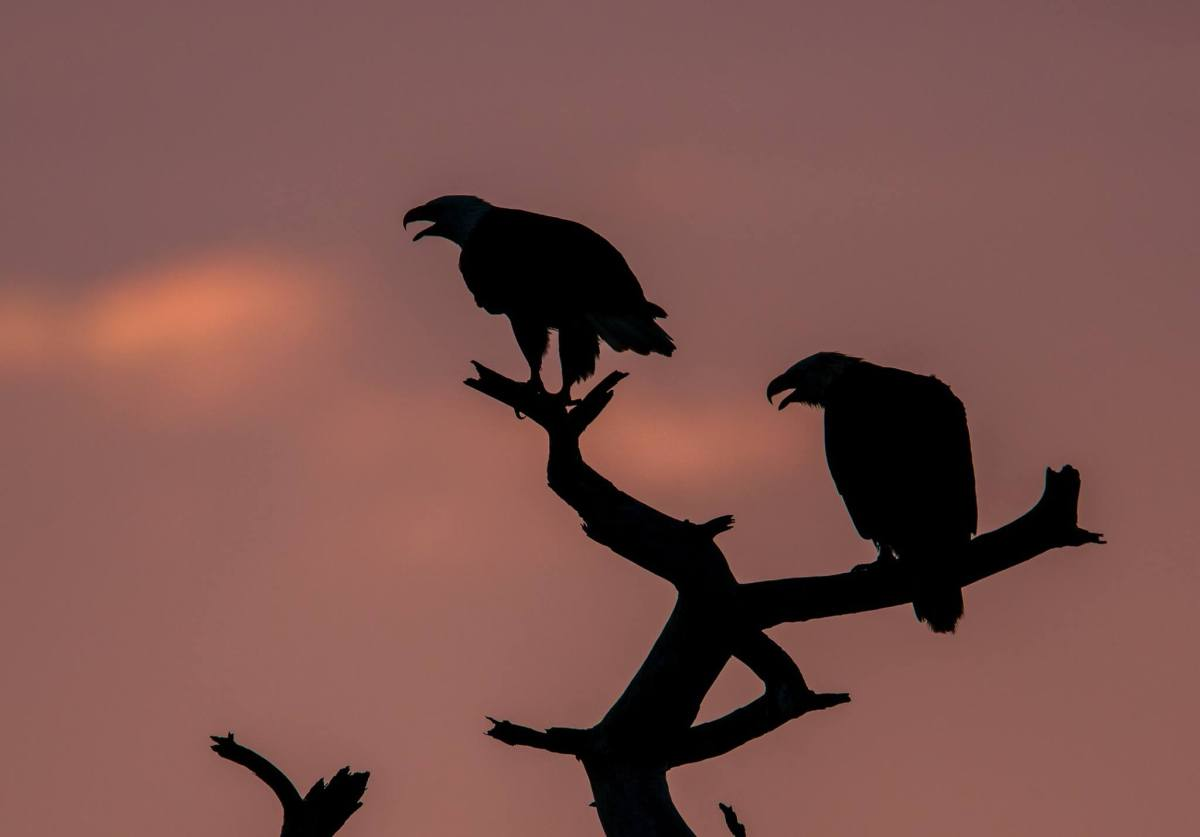 What Crows Know