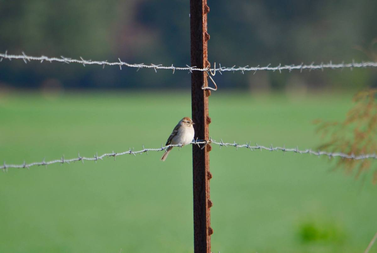 Fences & Feathers