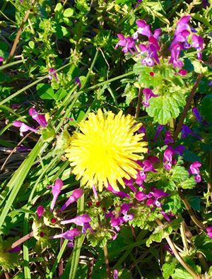 Humble Weeds