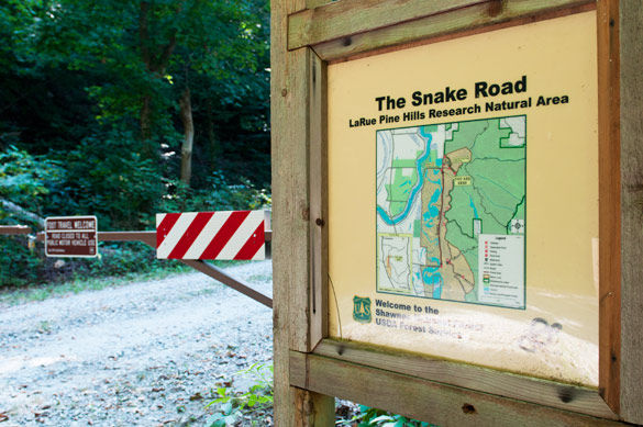 The Snake Road