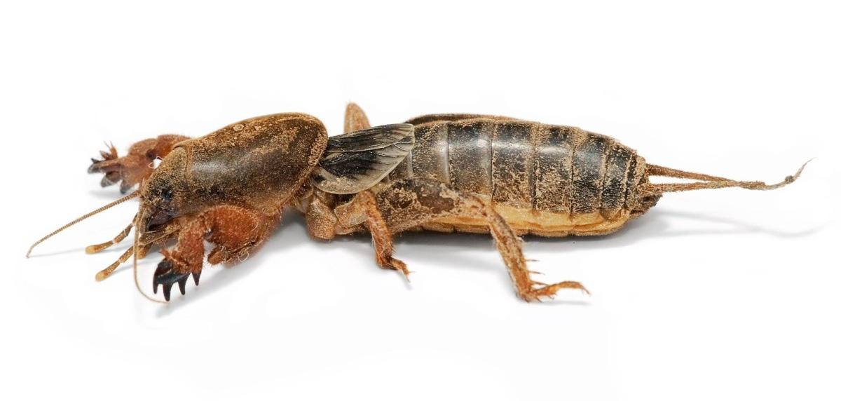 Big, Bad, Bugs