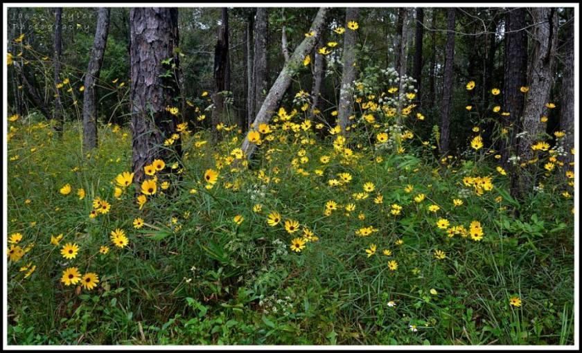 fall roadside beauty--jason taylor